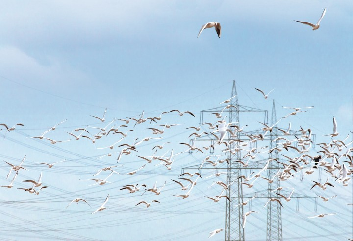 Bird protection. Birds flying near overhead powerlines visible in the background